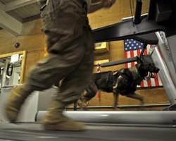 Секс в американской армии